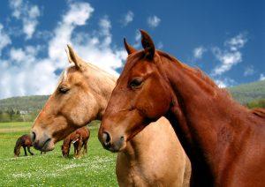 Zdjęcie ozdobne - charakter dekoracyjny - konie